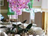 Badezimmer Deko orchidee Die 51 Besten Bilder Von orchideen